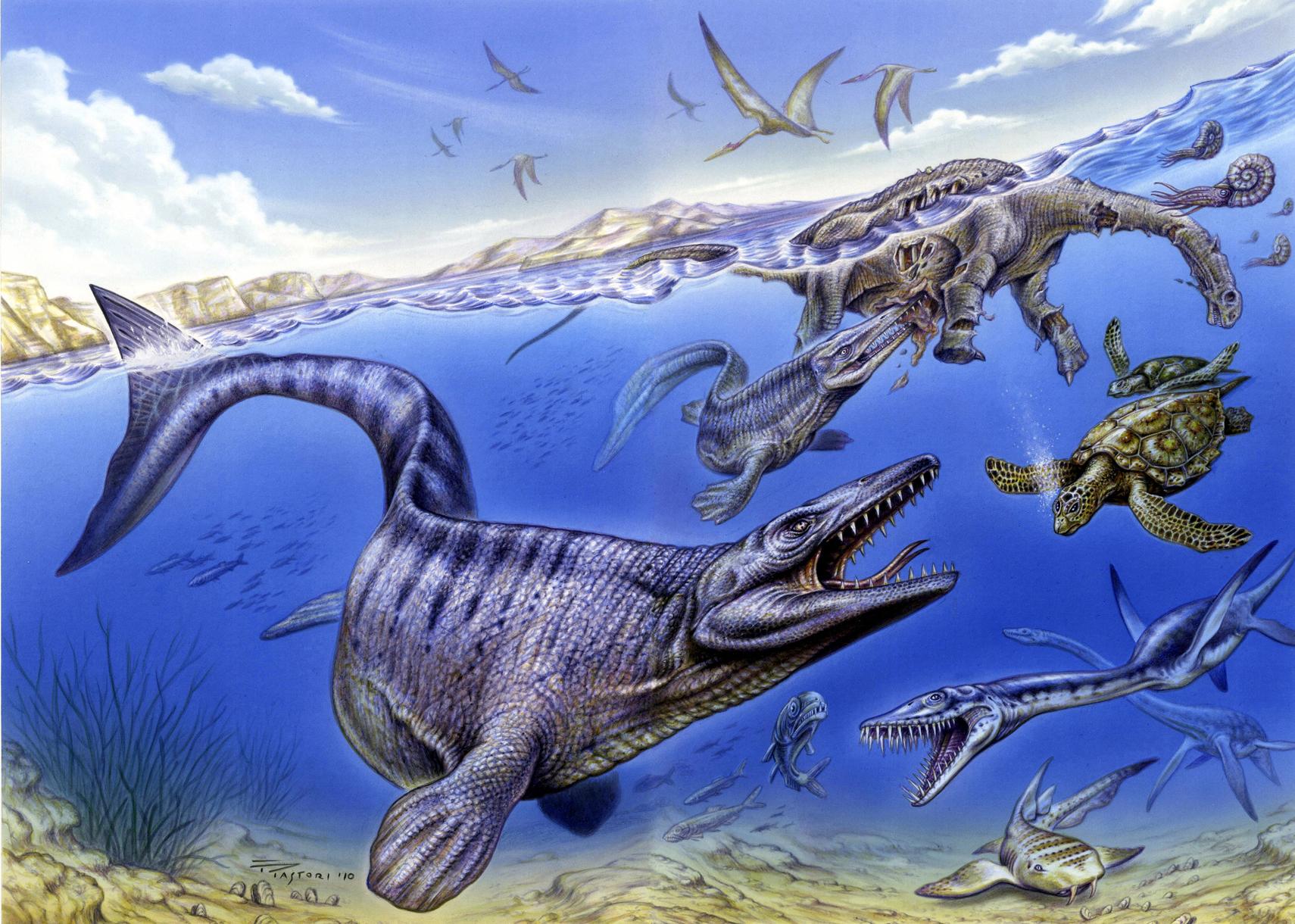 даже хорошее картинки про древних морских животных как можно полюбоваться